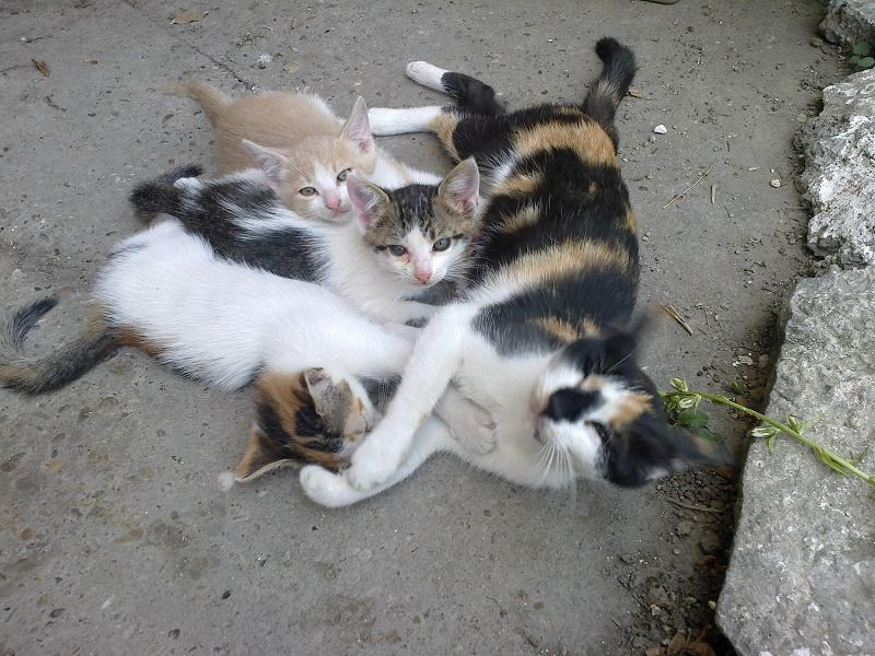 pisici-din-constanta-pe-strada-pui