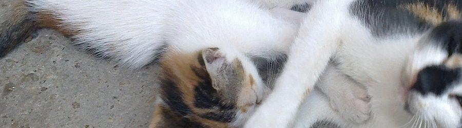 Pisicile orasului – tolerate, prea putin ingrijite, adesea victime in trafic